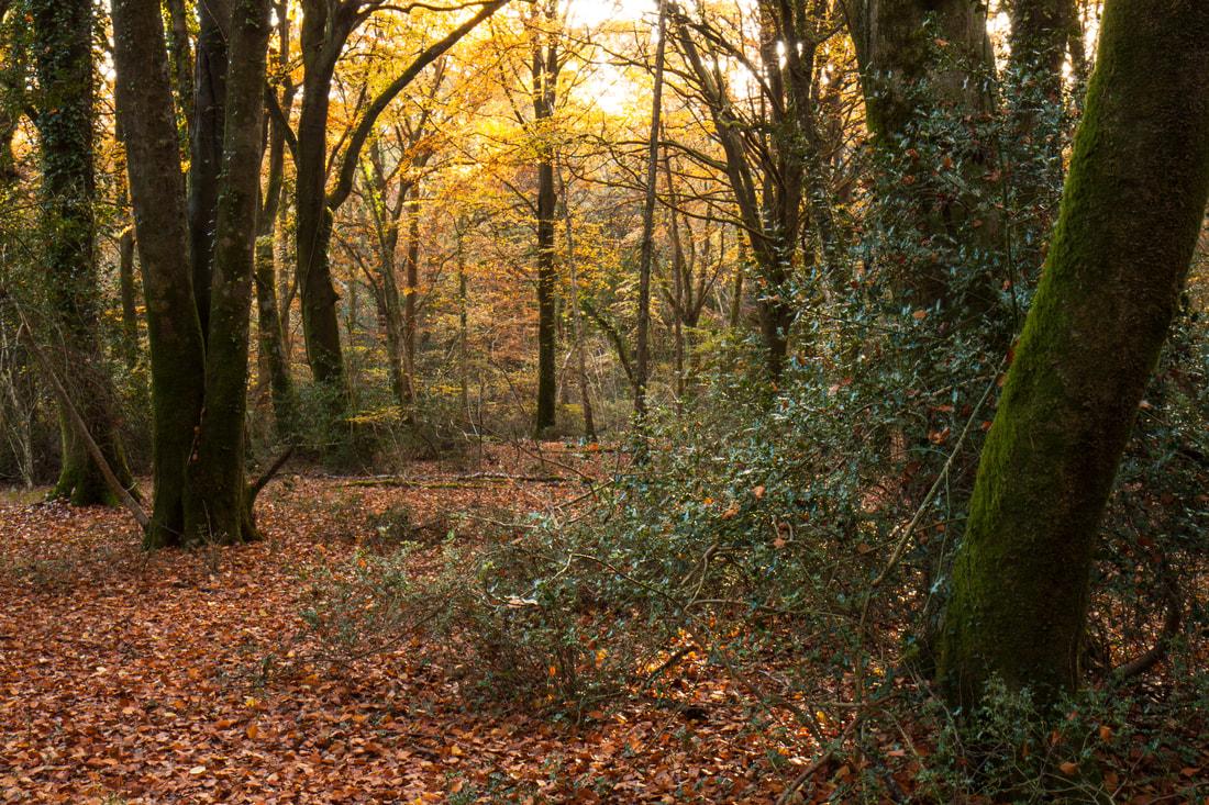 Landed - forest gardening - Garden Blog